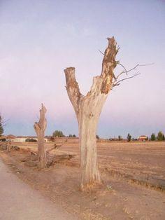 Los árboles secos
