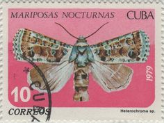 Butterfly Stamp Value 2013 | Collect-It.com : Cuba Postage Stamp View