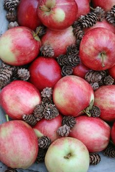 Nothing better than fall red apples! So seasonal. So crisp. Brain's fave for sure!!<3