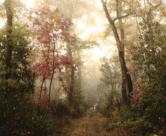 Autumn wood (by dqph)
