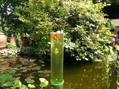 Watch tower for goldfish in my aquarium