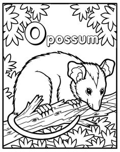 Opposum Coloring Page