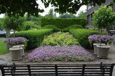 observations of a landscape designer Primula Denticulata, Eucalyptus Centerpiece, Garden Windmill, Sweet Woodruff, Faux Grass, Topiary Plants, Garden Works, Spring Flowering Bulbs