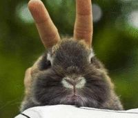 funny bunny ears fingers
