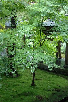 mousse et jardins de mousse on pinterest moss garden growing moss and japanese gardens. Black Bedroom Furniture Sets. Home Design Ideas