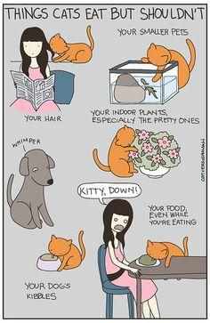 Cat Food by aprintaday, via Flickr Cat Versus Human (Yasmine Surovec)