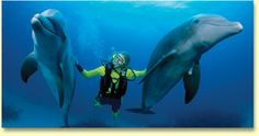 Google Image Result for http://erwinnavyanto.in/wp-content/uploads/2012/07/scuba-diving-with-dolphins.jpg scuba diving with dolphins- oh yeah!
