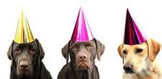Dog with Party Hat - Bing images