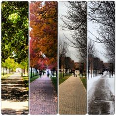 The Seasons of WSU created by Heather McIntosh!