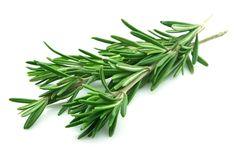 Rozmarín je považovaný za jednu z najvoňavejších a najobľúbenejších byliniek. Jeho povzbudivá a osviežujúca vôňa s nádychom živíc je veľmi … Čítať ďalej