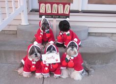 Clever Ideas for Dog Halloween Costumes - Fidose of Reality Halloween Costume Contest, Halloween Season, Poses For Photos, Dog Costumes, Photo Contest, Dog Mom, Trick Or Treat, Your Dog, Dog Lovers