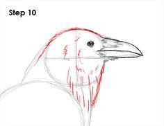 Raven Crow Drawing 10