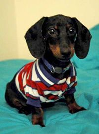I better get Slinky an outfit like this. He'll look awesome :)
