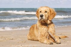 Pack the car and bring your pooch to the beach! The Beacon House Inn vacation cottages are the perfect escape!