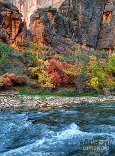 ✯ Virgin River in Fall - Zion Canyon National Park