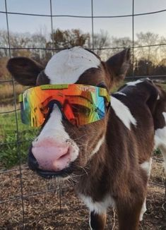 Baby Farm Animals, Cute Wild Animals, Baby Cows, Cute Little Animals, Cute Funny Animals, Animals And Pets, Cow Pictures, Baby Animals Pictures, Cute Animal Pictures