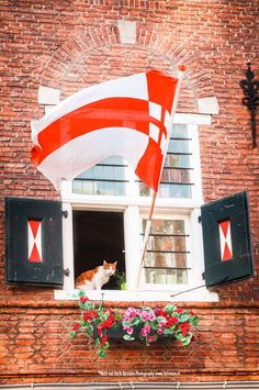 Cat in window of monumental pub 'In den grooten Slock' in the historical centre of Amersfoort, The Netherlands