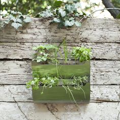 Grow your herbs on a wall!