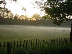 Schapen in de mist. Uffelte