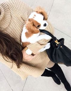 Could that puppy be cuter? King Charles Dog, King Charles Spaniel, Cavalier King Charles, Cute Small Animals, Spaniel Breeds, Beautiful Dogs, My Animal, Puppy Love, Cute Puppies