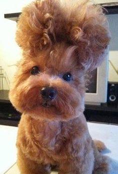 10 animais de estimação com penteados modernos até demais.