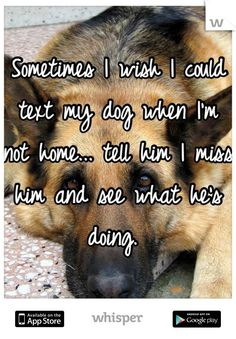 """Sometimes I wish I could text my dog when I'm not home... tell him I miss him and see what he's doing. """