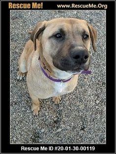 - Wisconsin German Shepherd Rescue - ADOPTIONS - Rescue Me! Animal Adoption, Pet Adoption, German Shepherd Rescue, Post Animal, Wisconsin, Labrador Retriever, Pitbulls, Animals, Labrador Retrievers