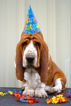 Happy birthday bassett hound pictures images photos happy birthday to me basset bookmarktalkfo Gallery
