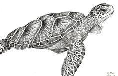 realistic sea turtle sketch