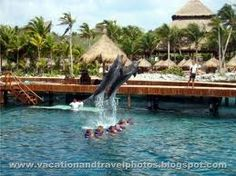 Swam with dolphins at Xcaret in Cancun. Honeymoon, 1998. Amazing experience. Do it!
