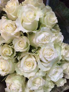 White Ice breaker roses