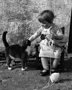 Three year old Chrissie Cheyne with her cat and knitting - Walls, Shetland ca. 1943
