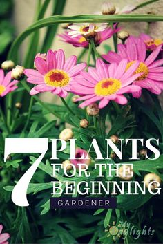 Just starting out in the garden?  Not sure what to plant?  Check out 7 plants for the beginning gardener!  Beautiful and easy to grow flowers.