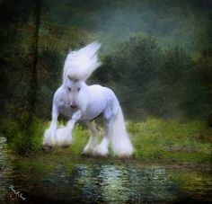 Horse Art - The Reflection by Fran J Scott All The Pretty Horses, Beautiful Horses, Animals Beautiful, Cute Animals, Stunning Photography, Art Photography, Horse Mane, Gypsy Horse, My Animal