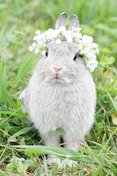Bunny Wearing A Floral Crown - Cute! Cute Baby Bunnies, Cute Baby Animals, Animals And Pets, Funny Animals, Cute Babies, Big Bunny, Nature Animals, Wild Animals, Cute Creatures