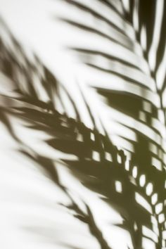 Defocused palm leaves shadow on white backdrop Free Photo Aesthetic Backgrounds, Aesthetic Iphone Wallpaper, Wallpaper Backgrounds, Aesthetic Wallpapers, Plant Aesthetic, White Aesthetic, Ombres Portées, Plakat Design, Images Esthétiques