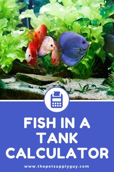 Aquarium Care for the Freshwater Guppy Guppies are maybe the most popular type of freshwater fish to keep in a fish tank. Guppies are sturdy fish that can Best Aquarium Fish, Goldfish Aquarium, Goldfish Tank, Tropical Fish Store, Tropical Fish Tanks, Tropical Fish Aquarium, Aquarium Design, Aquarium Ideas, Diy Aquarium
