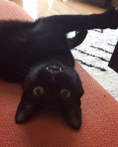 Upside down teefie surprise : teefies