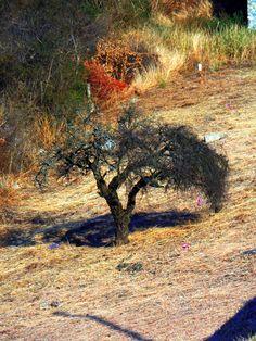 El árbol desafía al viento. El viento empuja sus ramas pero no puede vencer sus raíces.