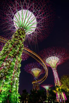 Singapore Supertrees These trees are almost as good as the real thing! Stunning scale and colour.