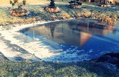 #garden #winter #ice #pond #january