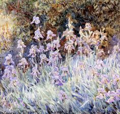 George Samuel Elgood- Irises In a Garden 1904 (Pencil and watercolor)