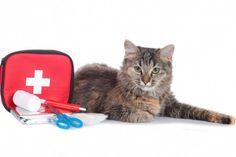 Katze mit Verbandskasten