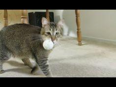 Monkey the Cat Hunts for Dinner - Man invents RFID-reader-triggered cat food dispenser