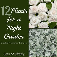 Night Garden Plants, enjoy your garden after the sun goes down!