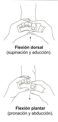 Flexiones (dorsal y plantar).