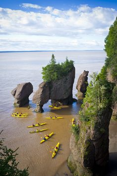 "Join a guided kayaking tour in the ""Bay of Fundy"" to experience the highest tides in the world around The Hopewell Rocks 