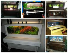 We already showcased some originals aquarium like this old iMac or Phone booth Aquarium but we could never imagine that an old piano could be transformed and upcycled into a fish tank. We found some nice repurposed piano into awesome aquarium done by aquarists. For other uses of old piano, you... #Piano, #Upcycled