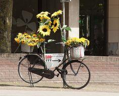 Zwolle, Bloem & Styling Fiets. Sunflower Bike