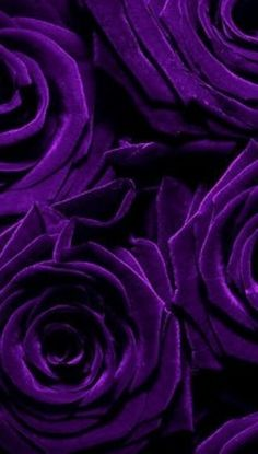 Deep purple roses. Inspiration for #purple #gems